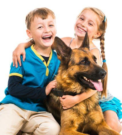 10 Vidéos de chien pour les enfants