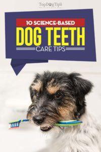 Conseils de soins de dents de chien à base scientifique