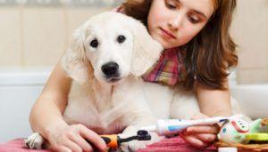 Conseils de soins pour dents de chien