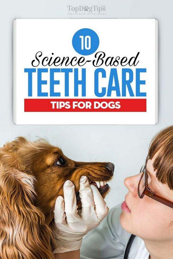 10 conseils de soins de dents basés sur la science