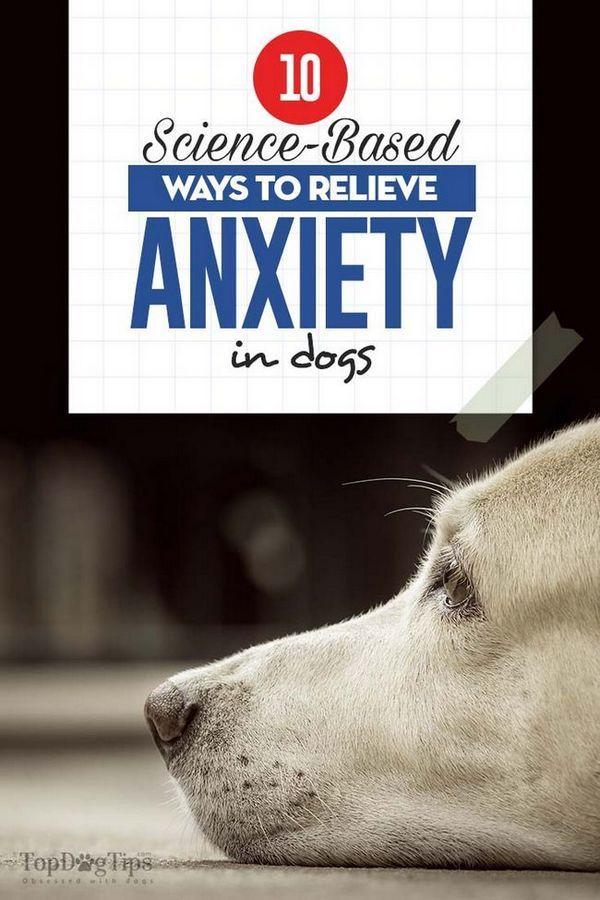 10 Moyens scientifiques pour soulager l`anxiété chez le chien