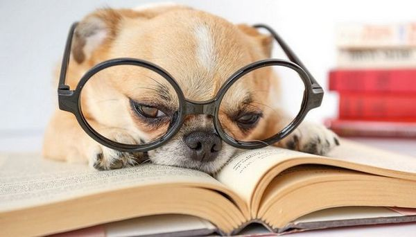 10 Livres uniques sur les chiens que tous les propriétaires de chiens doivent lire