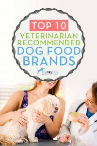 10 Marques de nourriture pour chiens recommandées par les vétérinaires qui sont peu coûteuses