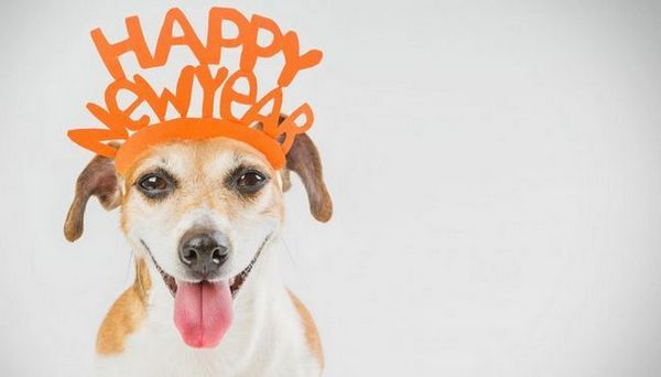 Idées pour les résolutions du Nouvel An pour les propriétaires de chiens