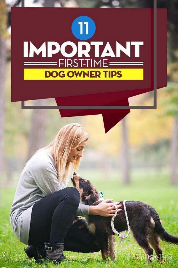 11 Conseils importants pour les futurs propriétaires de chiens pour les futurs adoptants