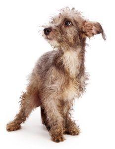 12 Signes que votre chien est stressé