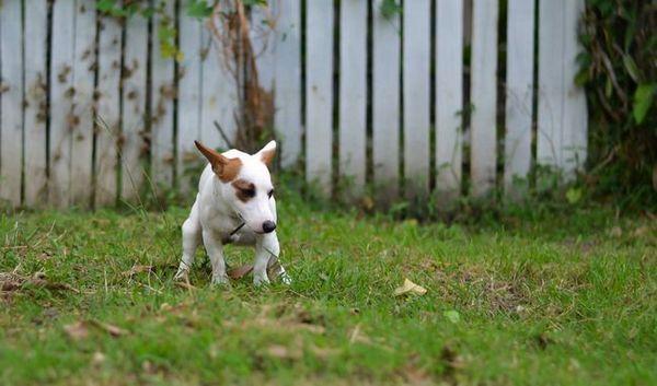 Façons de prévenir les vers chez les chiens