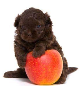 Fruits et Légumes pour les vers chez les chiens