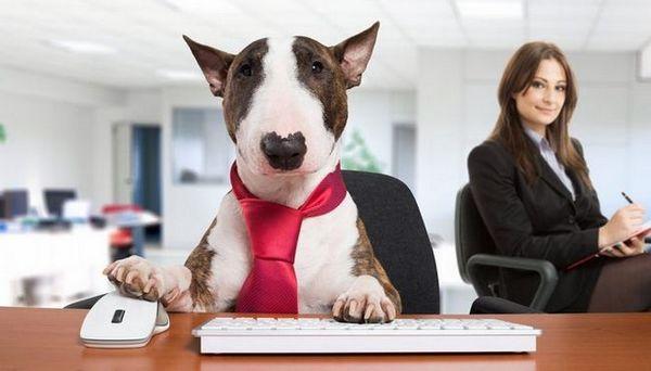 15 Plus grandes compagnies de chiens dans le monde et leurs marques les plus populaires