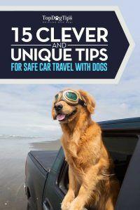15 Conseils de sécurité pour voyager avec des chiens en voiture