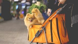Pensez à acheter une poussette pour animaux de compagnie
