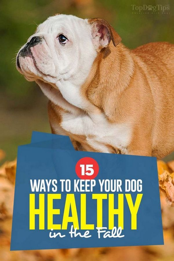 Les 15 façons de garder votre chien en santé à l`automne