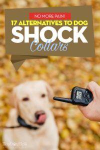 17 Alternatives aux colliers de choc pour chiens