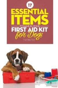 17 Articles essentiels à avoir dans votre trousse de premiers soins pour chiens