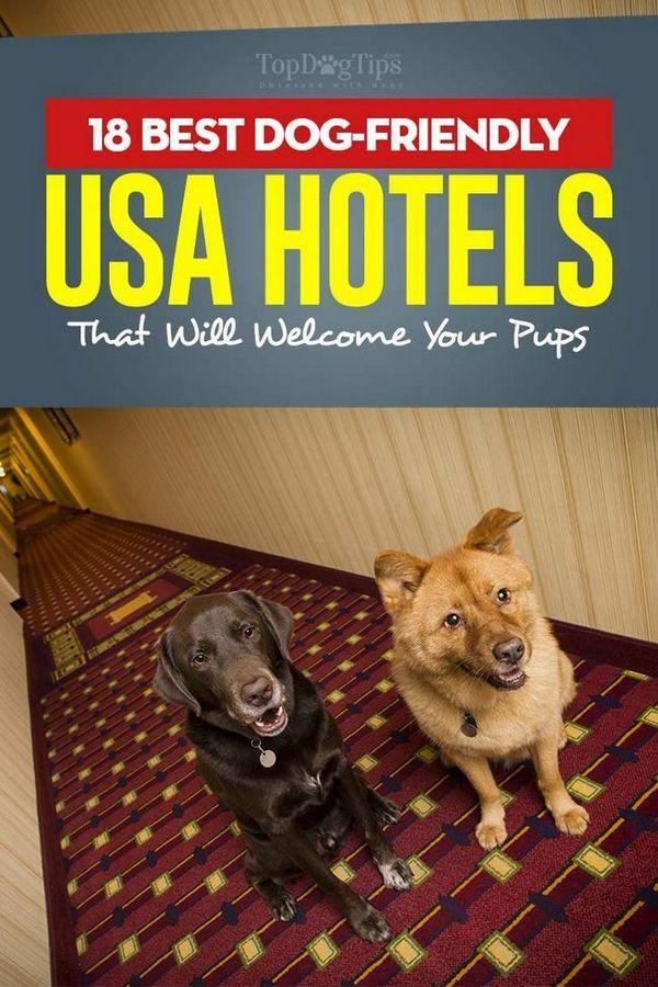 Les 18 meilleurs hôtels amis des chiens aux États-Unis