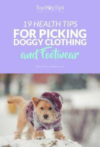 Conseils de santé pour choisir les meilleurs vêtements et chaussures pour chien