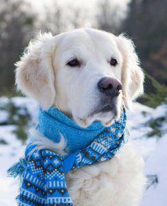 Chien avec une écharpe par temps de neige