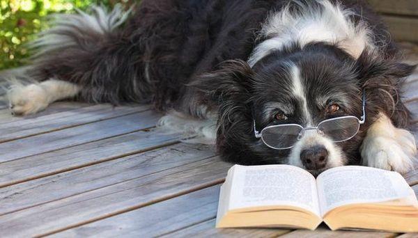 meilleurs livres de chien