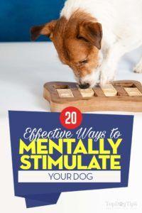 20 Moyens les plus efficaces pour stimuler mentalement votre chien