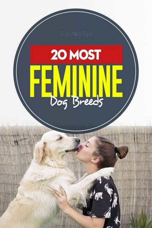 Les races de chien les plus féminines pour les femmes et les hommes