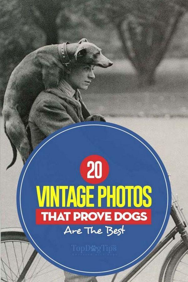 20 Photos qui prouvent que les chiens sont les meilleurs