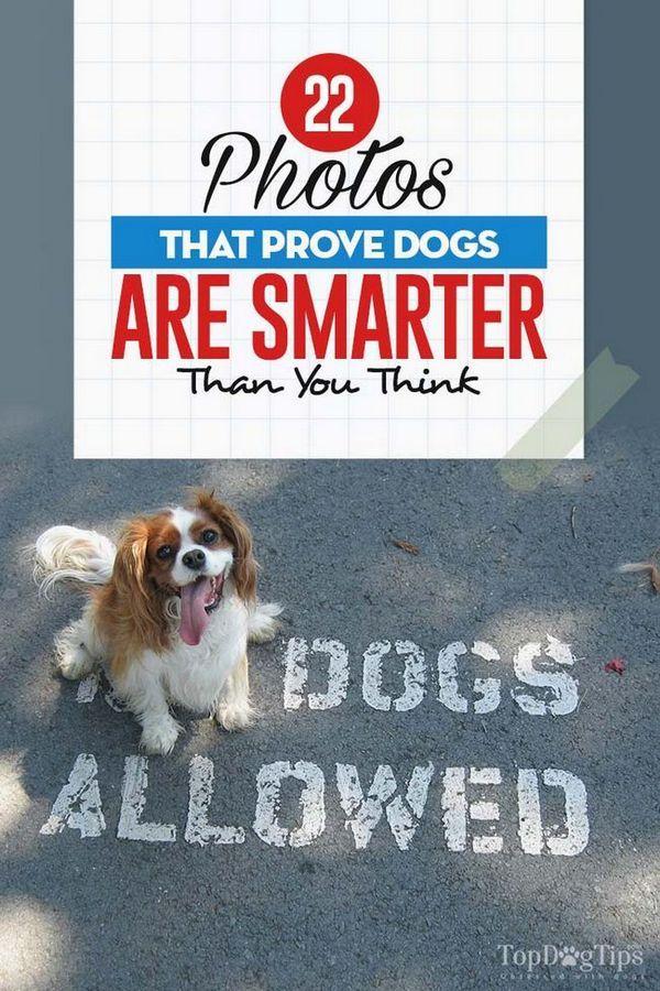 Les photos que les chiens prouvent sont plus intelligentes que vous ne le pensez