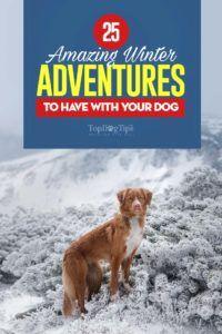25 Aventures hivernales amusantes à avoir avec votre chien