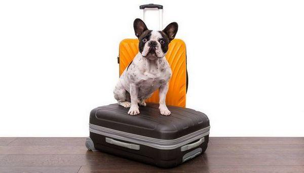 La plupart des races de chiens de voyage - Calm Breeds