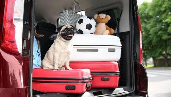 La plupart des races de chiens de voyage - Petites races de jouets