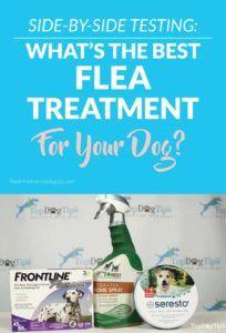 3 Comparaison des meilleurs traitements contre les puces et les tiques: première ligne contre Seresto contre meilleur vétérinaire