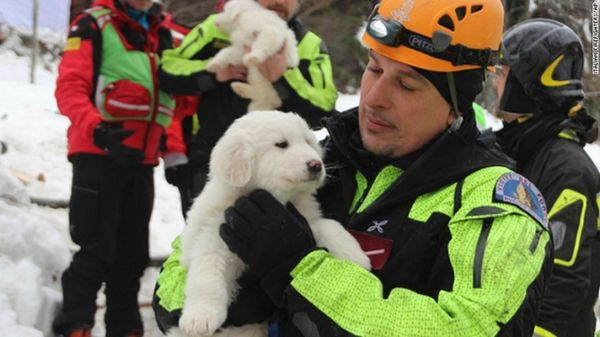 3 Chiots sauvés d`avalanche apportent de l`espoir aux sauveteurs [vidéo]