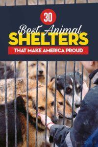 30 Refuges dédiés aux animaux qui font la fierté de l`Amérique