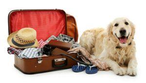chien amical chalets de vacances