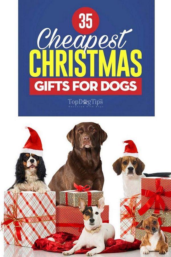 34 Cadeaux de Noël les moins chers pour les chiens