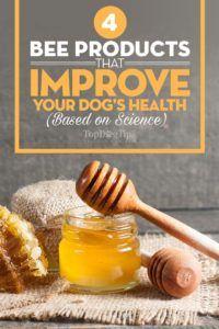 4 Produits pour les abeilles qui peuvent améliorer la santé de votre chien (basé sur la science)