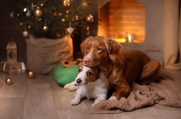 4 Conseils apaisants pour assurer des animaux sans stress pendant les fêtes de fin d`année