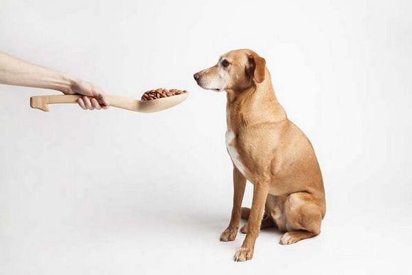 Pourquoi l`alimentation humaine pour chiens est-elle meilleure?