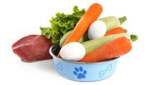 Raisons de nourrir les chiens avec des aliments humains