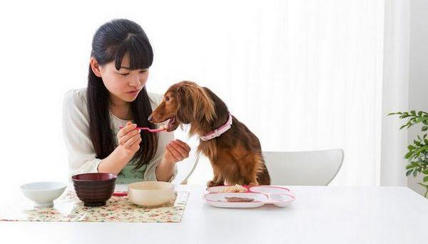 Certains aliments humains sont plus faciles à digérer pour les chiens