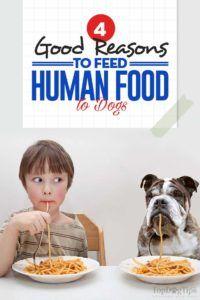 Les 4 bonnes raisons de nourrir les chiens avec de la nourriture humaine