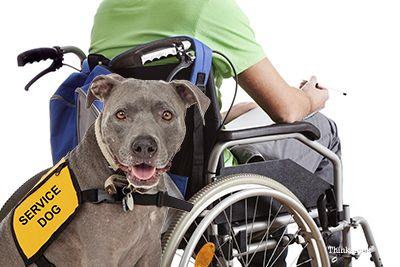 4 Pattes pour la capacité: une mission pour connecter les chiens d`assistance aux enfants handicapés
