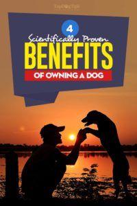 Avantages physiques et sociaux de posséder un chien
