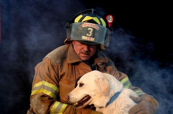 4 Conseils pour garder les animaux à l`abri des incendies de maison