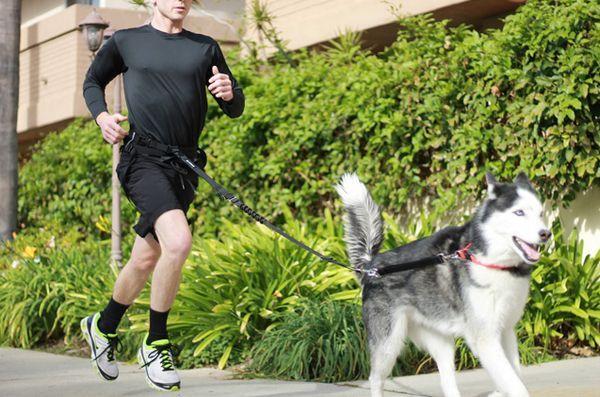 4 Astuces d`entraînement pour les chiens