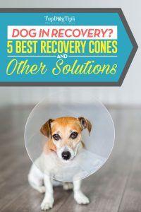 5 Meilleurs cônes de récupération de chien pour empêcher les chiens de lécher les plaies
