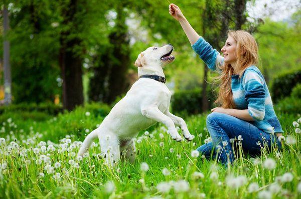 5 Livres pour améliorer la communication avec votre chien