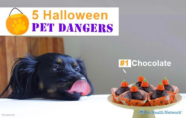 5 Dangers pour animaux de compagnie d`Halloween
