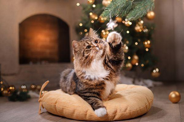 5 Risques de vacances pour les chats
