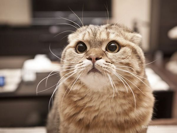 5 Tueurs de chats «silencieux»