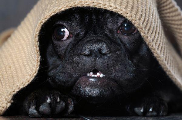 5 Choses que tout le monde a dit tueraient mes chiens (mais se sont avérés faux)